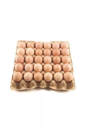 Telur Ayam Negeri / Papan