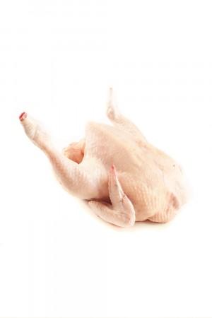 Ayam Potong