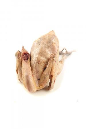 Ayam Kampung