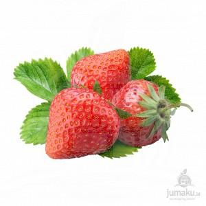 Strawberry (Fragaria daltoniana)